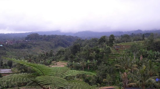 Jatiluwih Green Land: Beautiful view from above of Jatiluwih. Too bad that we did not try to look from closer distance