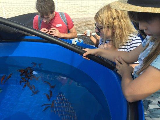Ocean Rider Seahorse Farm: My daughter observing seahorses