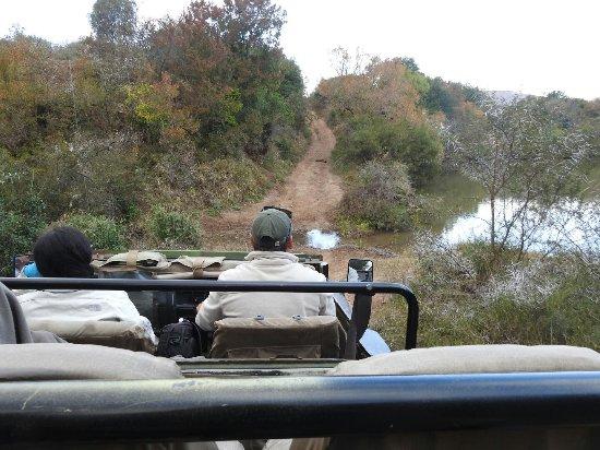 HillsNek Safaris, Amakhala Game Reserve: Game drive