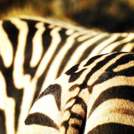 HillsNek Safaris, Amakhala Game Reserve: Zebra
