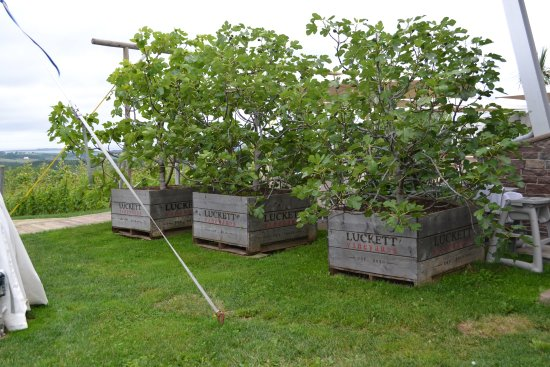 Wolfville Magic Winery Bus: The grounds at Luckett Vineyards