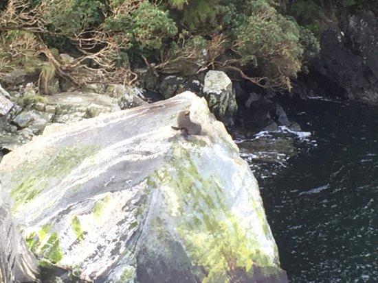 Te Anau, Nya Zeeland: photo6.jpg