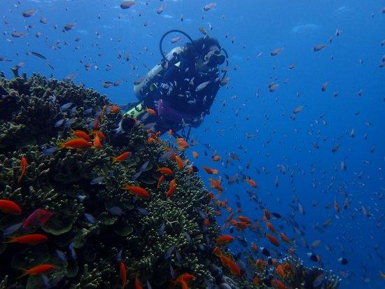 Kinasi Lodge: Kinasi diving