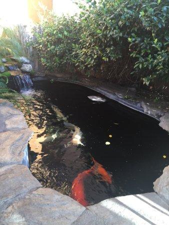 เรดบลัฟฟ์, แคลิฟอร์เนีย: photo1.jpg