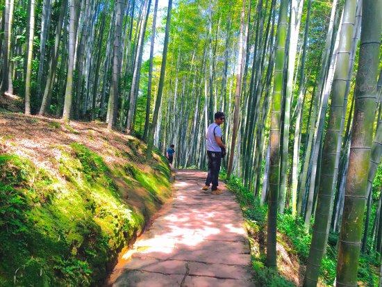 Shu'nan Bamboo Forest