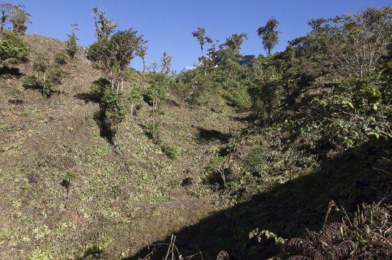 Pichincha Province, الإكوادور: toda la selva talada