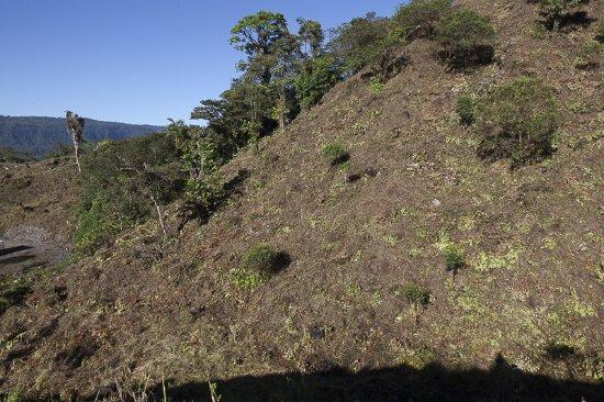 Pichincha Province, الإكوادور: acabaron con los árboles y plantas nativas hogar de aves y animales