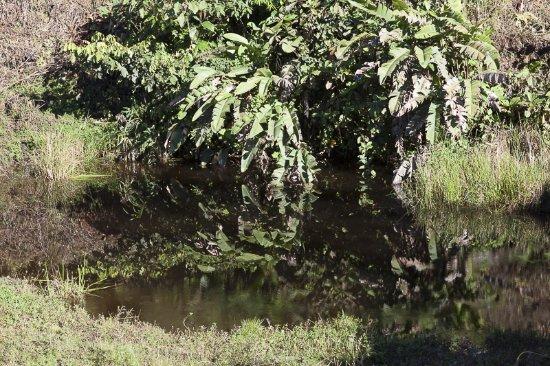 Pichincha Province, Ekwador: lagunas de agua empozada un atentado a la salud