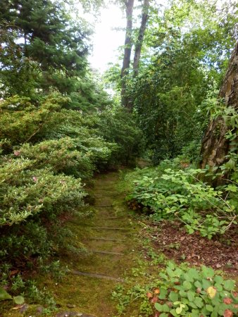 Porlock, UK : The forest path.