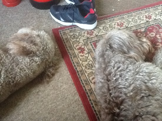 Hampshire, UK : Dogs fast asleep in the entrance hall