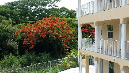 Grenada Gold Apartment Hotel: 20160625_135649_large.jpg
