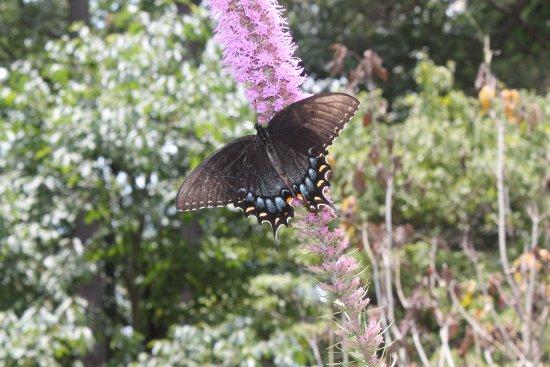 Huntsville Botanical Garden: Beautiful on some of the flowers.