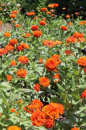Huntsville Botanical Garden: Pretty blooming flower at the gardens.