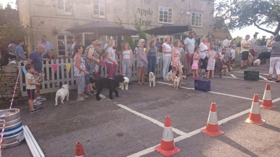 Woodmancote, UK: The Apple Tree does it again. Annual Dog Show. What an amazing afternoon. Great company. Great f