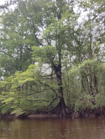 McClellanville, Carolina del Sur: wambaw creek
