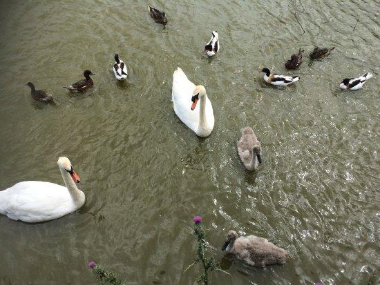 Slimbridge, UK: photo3.jpg