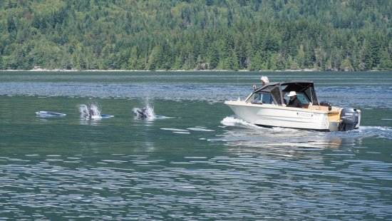 Campbell River, كندا: Dolphins