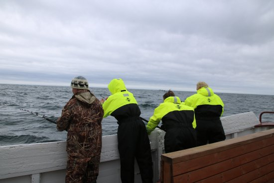 Breiddalsvik, Ισλανδία: Focused fishermen!