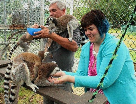 Orono, كندا: in a line feeding
