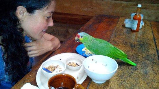 Hotel Finca Tatin: Desayuno en buena compañía