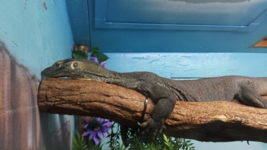 Cape May Court House, NJ: Lizard loungin'