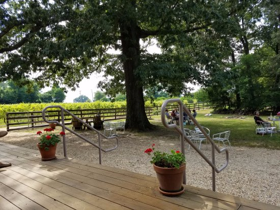 Saint Leonard, MD: vineyard and sitting area