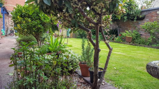 Chester Brooklands Bed and Breakfast : Our Garden