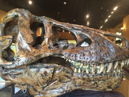 Bob Campbell Geology Museum : photo2.jpg