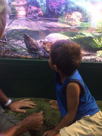 West Hartford, CT: turtle watching
