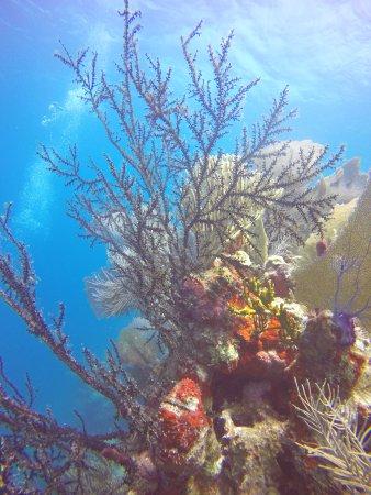 Utila, ฮอนดูรัส: Shot of the reef.