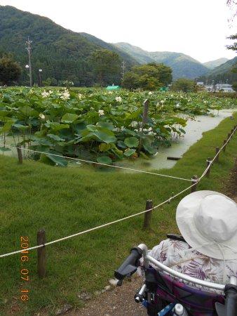 Minamiechizen-cho, Japan: 私達は自分のもので回っていますが、車いすはそばのそまやま温泉でも借りられるようです。