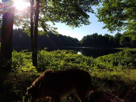 Bluegill Lake Campground: View of Bluegill Lake from the trail surrounding the property
