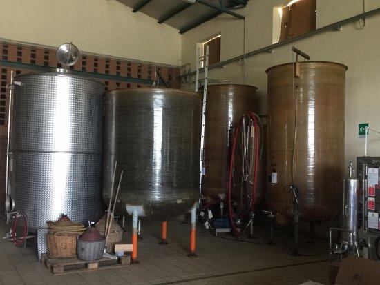Sinio, Italia: Winery