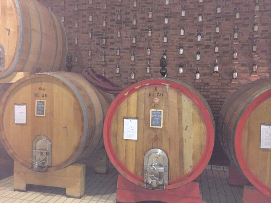 Sinio, Italia: Onsite winery