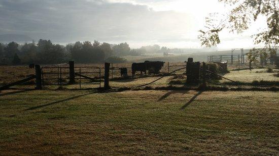 Maitland, Australia: Scenery