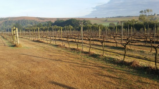Maitland, Australia: Vineyards