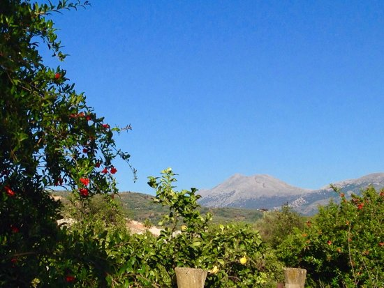 Heraklion Prefecture, Grecia: Kritikifarmadonkeytours