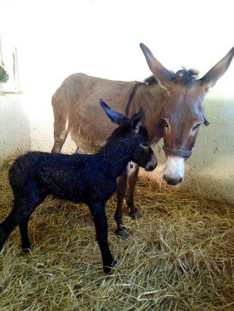 Heraklion Prefecture, Grèce : Kritiki Farma donkey tours