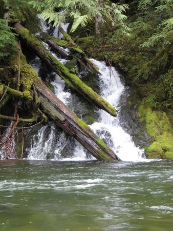 Rhododendron, OR: Falls on the Salmon River