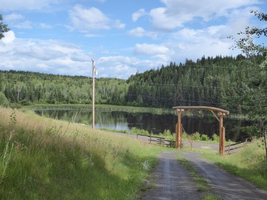 100 Mile House, Canada: Lake view from Tom's BnB parking area and house