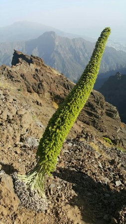 Roque de Los Muchachos : image-0-02-01-c5ff0fbd7878185c2d44bb8192e0046d94d5a5f76ad4ecf336008e5950e0c85d-V_large.jpg