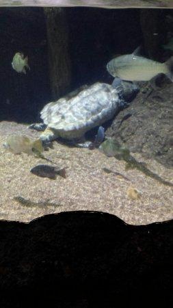 Downtown Aquarium: conociendo