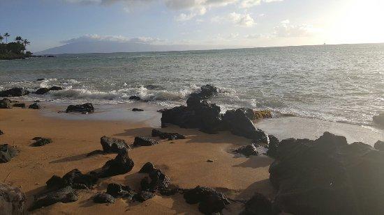 كانا فولز ريزورت: Lovely beach just across the street. Friendly lizards on the grounds😊