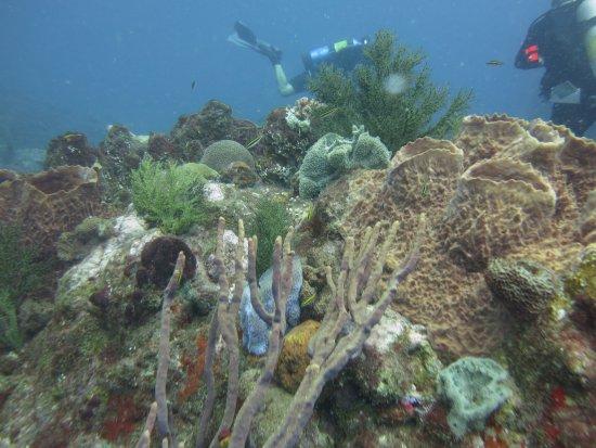 Saba Divers: Beautiful Reef