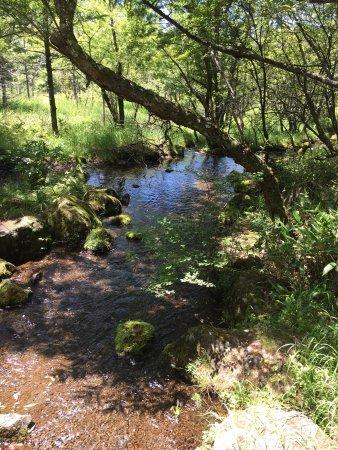 Tateshina Gosensui Shizenen: 立科牧場からゴンドラに乗って空中散歩。 木陰の爽やかな風が心地よく。 リフレッシュできました。 トイレもきれいでした。