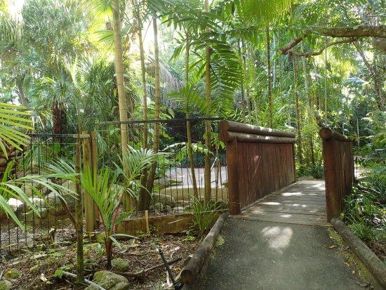 Kewarra Beach, Australie : gardens near heated pool