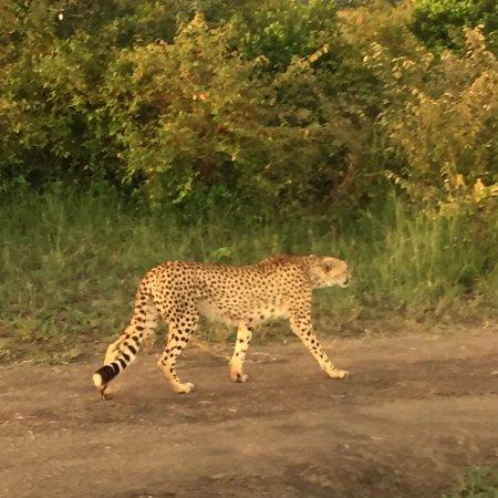 Tipilikwani Masai Mara Camp: photo0.jpg