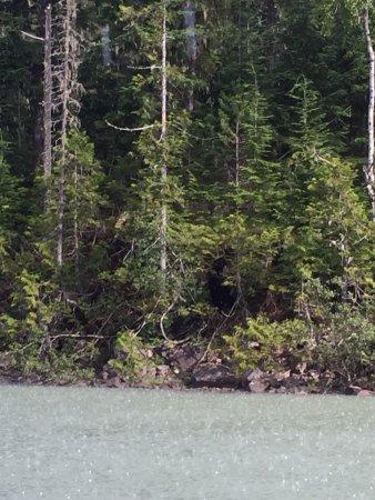 Blue River, كندا: photo2.jpg