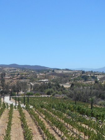 Temecula, CA: Frangipani Winery, our first stop.