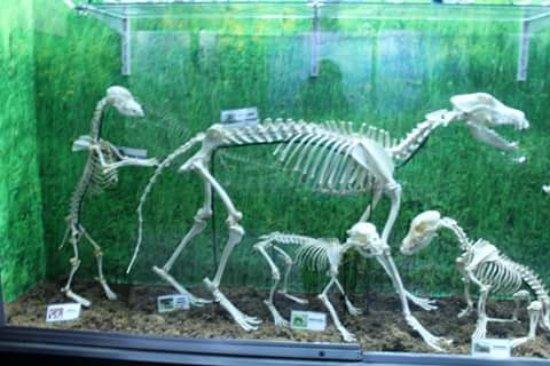 ดาเวา, ฟิลิปปินส์: bone collection